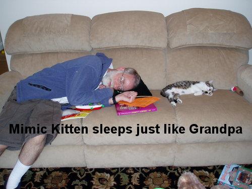Oie_LOLCat_Sleeps_Like_Grandpa