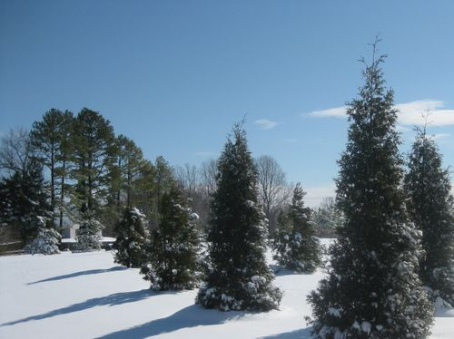 March Snow Trees