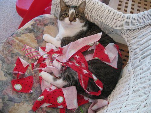 Scrap Cat