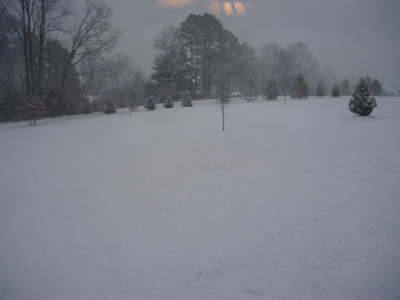 Snow_january_2008_backyard